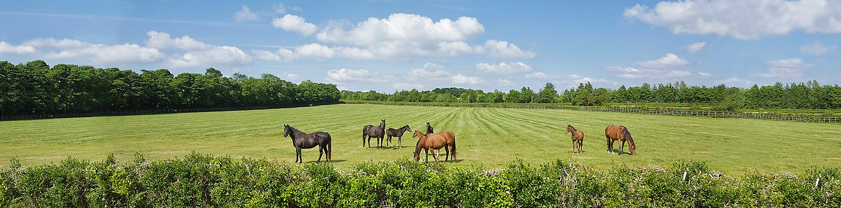 Equestrian Property For Sale And To Rent Windsor Clive