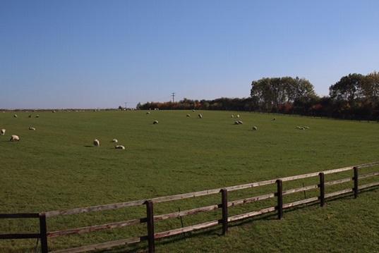 Stud Farm To Rent