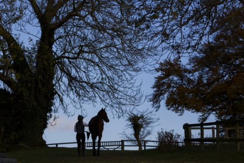A RENOWNED NEWMARKET  STUD FARM